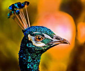 birds, expression, and look image