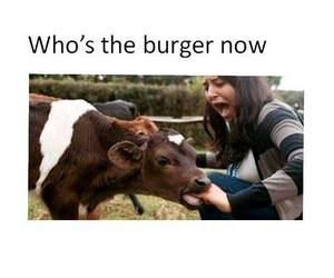 burger, cow, and funny image