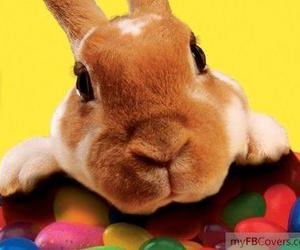 bunny, cute, and candy image