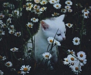 cat, flowers, and hipster image