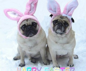 easter, pug, and happy easter image