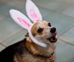 animal, bunny, and dog image