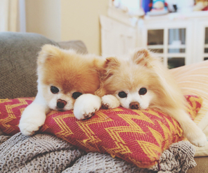 dog, boo, and love image