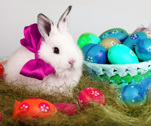 bunny, rabbit, and easter eggs image