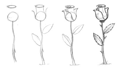 How To Draw A Rose Learn How To Draw A Rose Step By Step