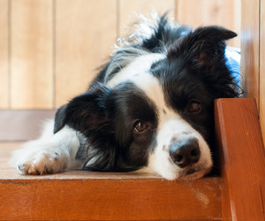 baby animals, border collie, and cute animals image