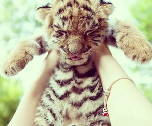 cute, baby, and tiger image