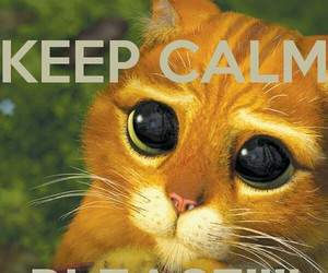 cat, please, and keep calm image