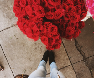 flowers, red, and roses image