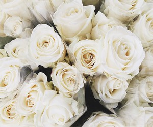 flowers, beautiful, and roses image