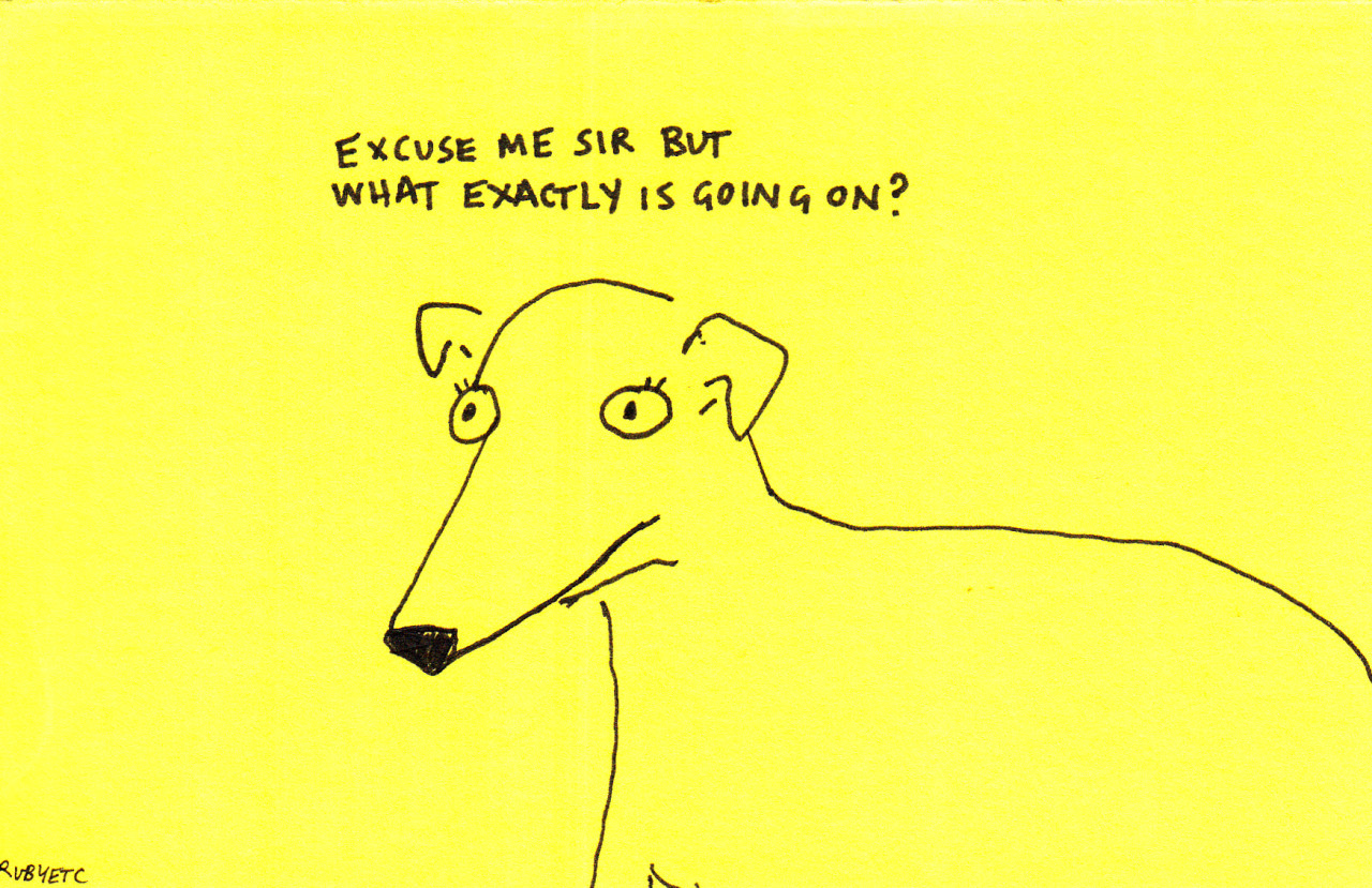 dog, quotes, and yellow image