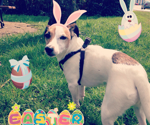 dog, easter, and jackrussel image