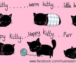 kitty, cat, and the big bang theory image