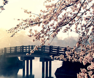 nature, bridge, and flowers image
