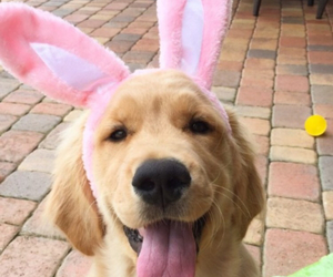 adorable, dog, and easter image