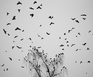 bird, tree, and black and white image