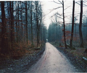 autumn, road, and trees image