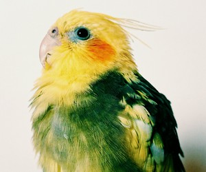 bird, green, and free image