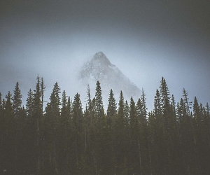 mountains, forest, and tree image