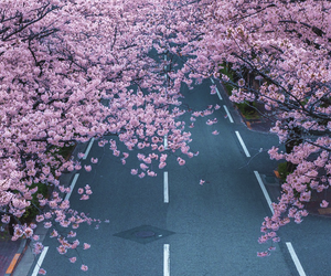 tree and road image