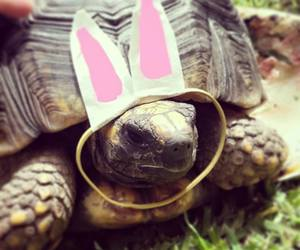 easter, funny, and happiness image