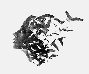 bird, art, and black image
