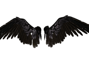 wings, png, and transparent image