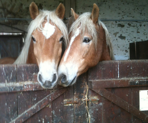 beautiful, chevaux, and horses image