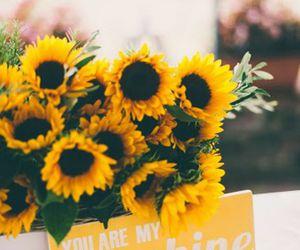 flowers, sunshine, and nature image