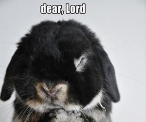 funny, cute, and bunny's prayer image