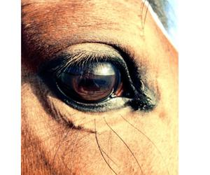 cheval, equestrian, and equitation image