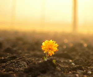 flower and hope image