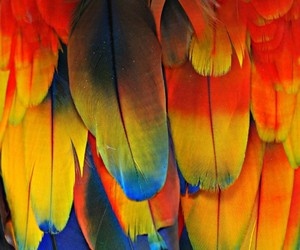 feather, parrot, and color image