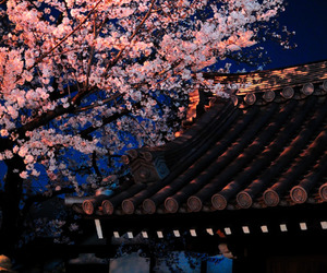 cherry blossoms, japan, and night image