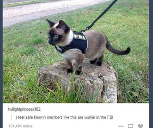 cat, funny, and fbi image