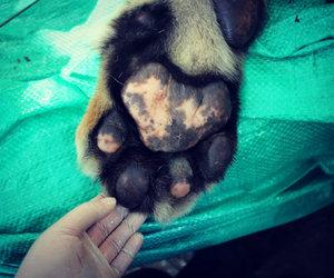 path, veterinary, and tigger image