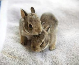 animal, rabbit, and bunny image