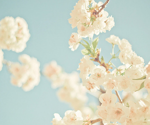 cherry blossom and flowers image