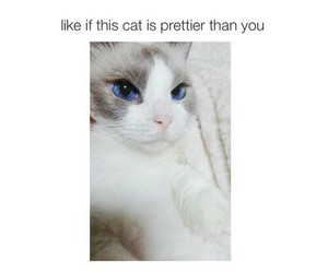cat and you image