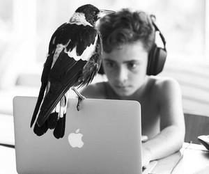 apple, bird, and boy image
