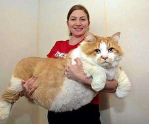 cat, fat, and big image