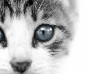 animal, beuty, and cat image