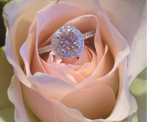 ring, rose, and T image
