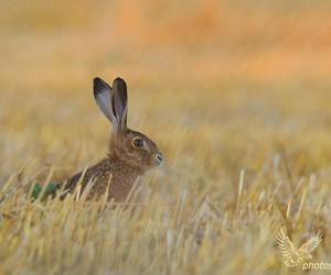 photography, animals, and rabbit image