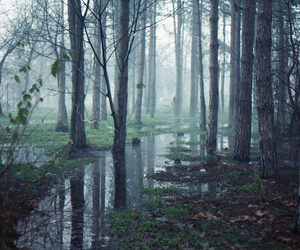 fog, spring, and forest image