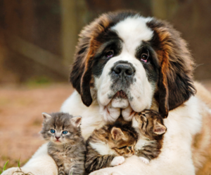 dog, kitten, and animal image