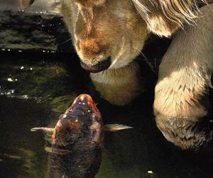 dog, fish, and animal image