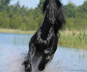 adorable, lovely, and friesian image