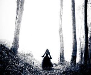 black and white, fantasy, and forest image