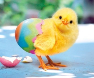 easter, Chicken, and egg image